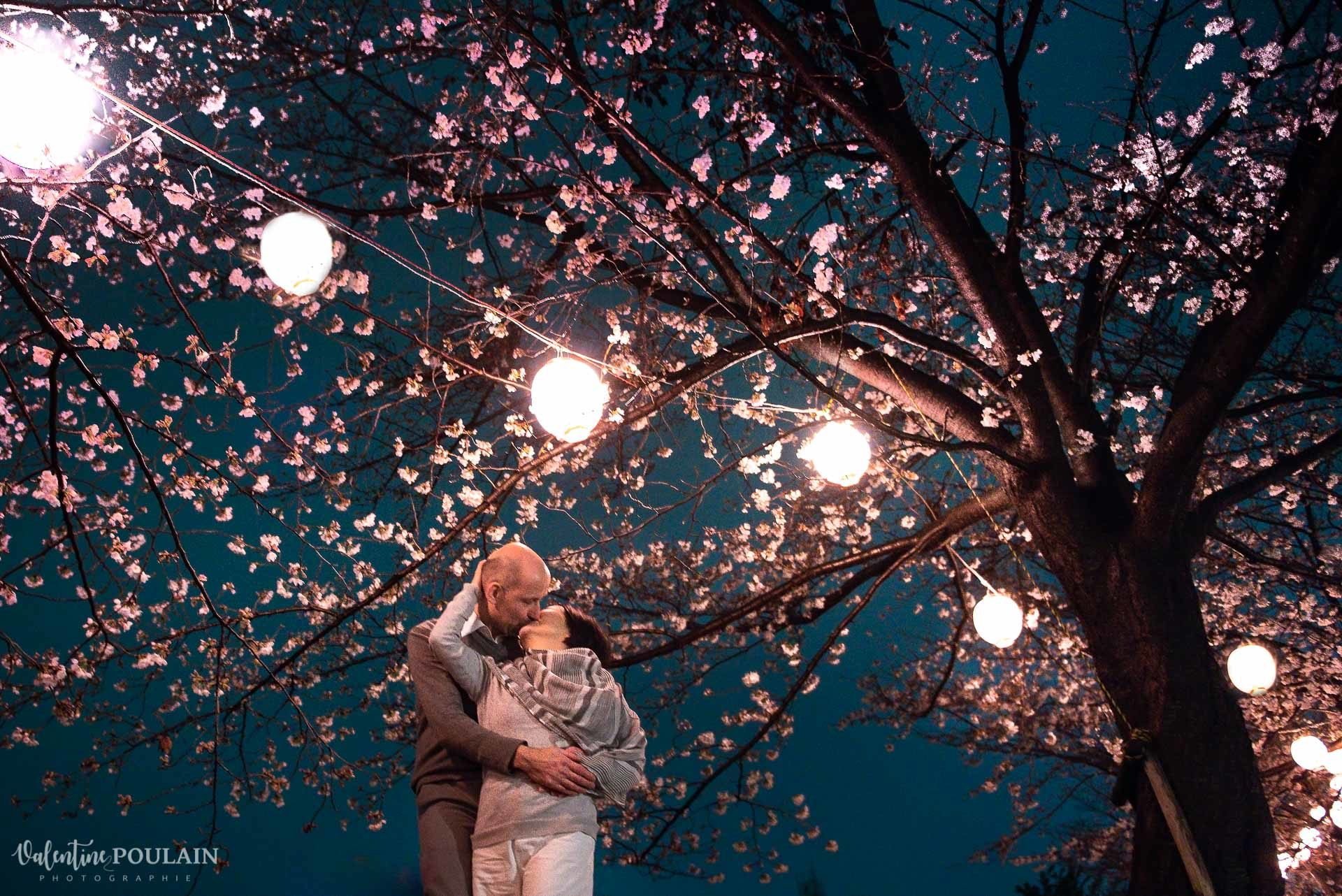 cerisier Kyoto - Valentine Poulain