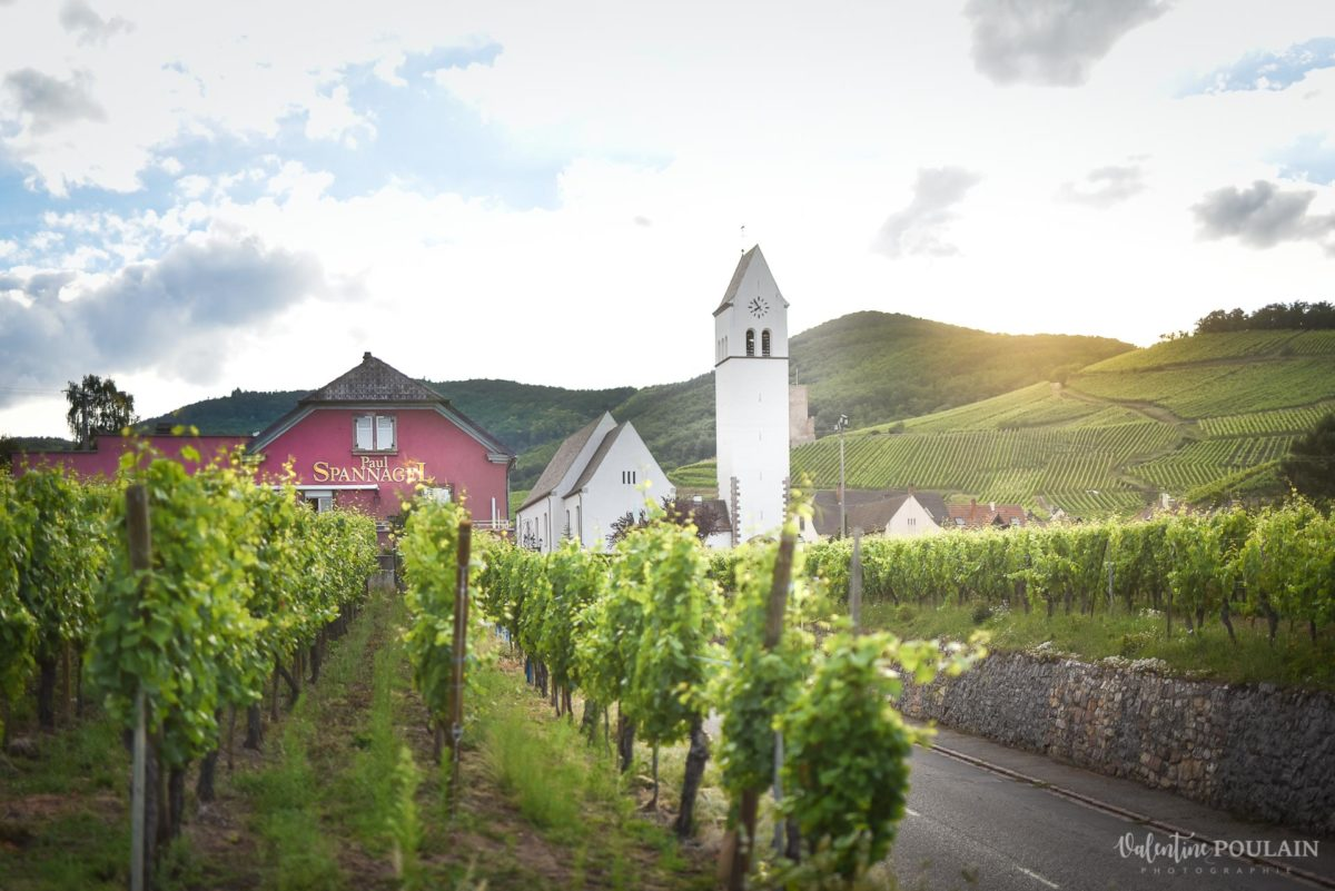 vue photo corporate Domaine vigneron - Valentine Poulain
